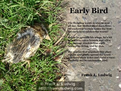 1 - Early Bird Poem