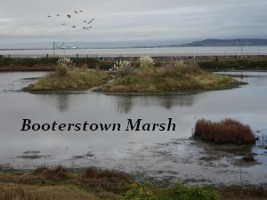 Booterstown Nature Reserve