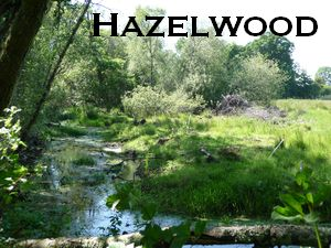 Hazelwood, Half Moon Bay