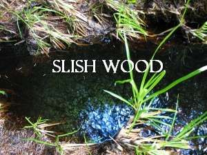 Slish Wood (Sleuth Wood)